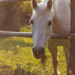 How to make money boarding horses on your hobby farm or homestead. Includes free printable checklist and contract to get started right away.