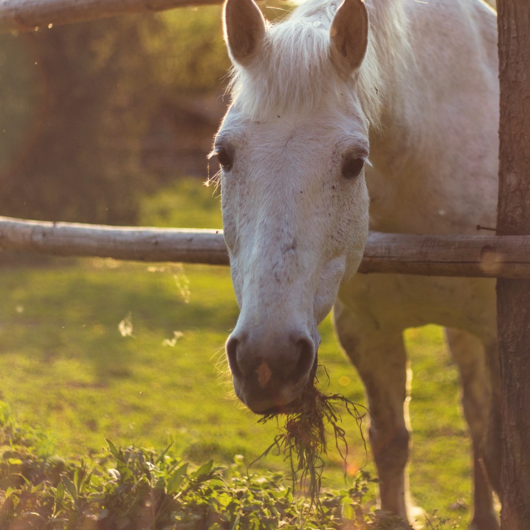 Should you start a horse boarding business, tips and free printable horse boarding contract