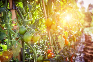 turn your homestead into a business
