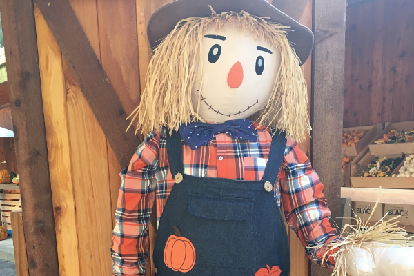 scarecrow at the pumpkin fest