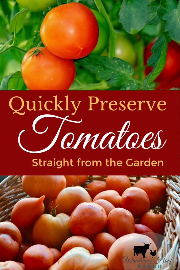 how to freeze tomatoes pin image, tomatoes on a vine and tomatoes on Kitchen counter