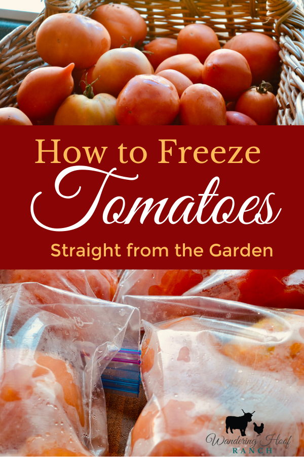 how to freeze tomatoes. Freezing is the quickest way to preserve tomatoes from the garden. If you've grown or have access to a large quantity of red tomatoes then freezing is your best option to stop the ripening process and save tomatoes to use in soups and stews or can later on.