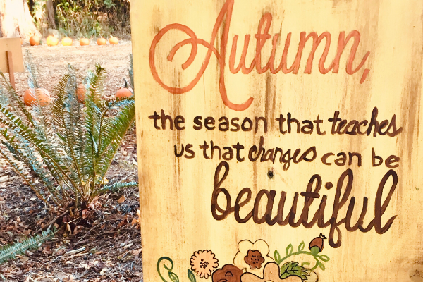 autumn quote, autumn the season that teaches up that changes can be beautiful