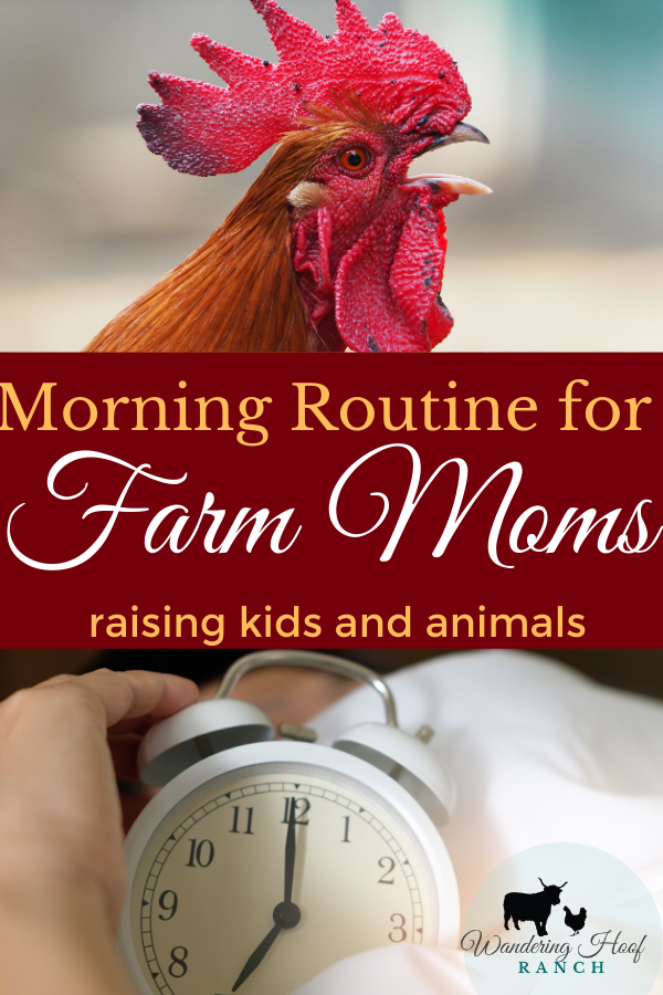 morning routine for farm moms raising kids and animals