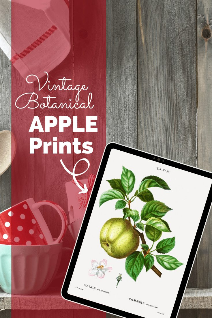 VINTAGE APPLE PRINTABLE IMAGE ON IPAD