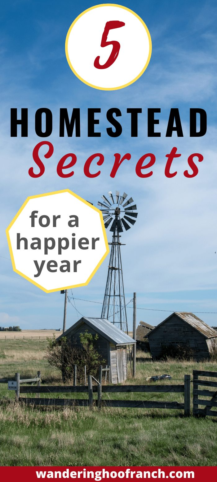 homesteading for beginners tips for a happier year pin