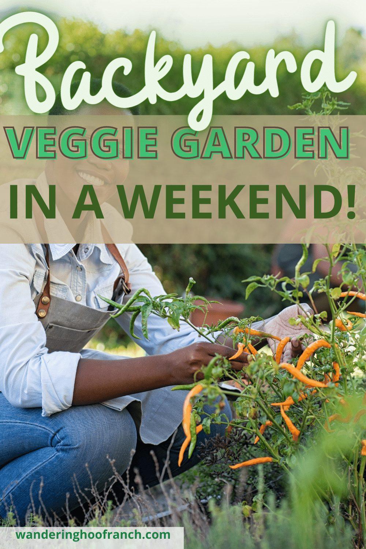gardener harvesting vegetables in her backyard vegetable garden